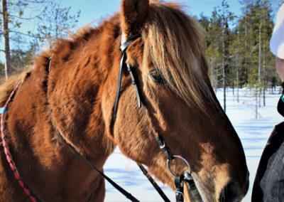 hevonen-0001