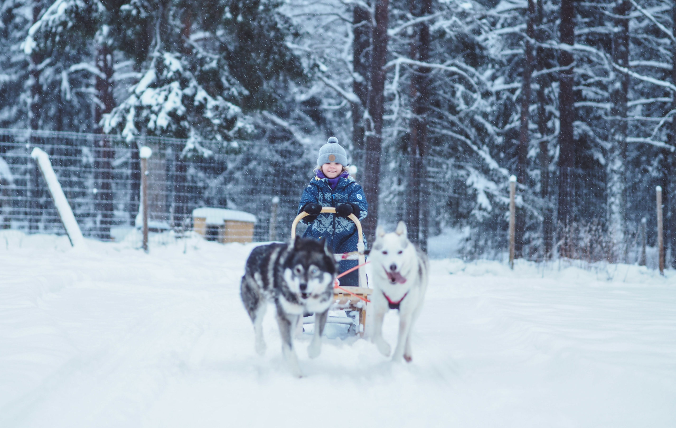 Kids husky sled
